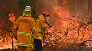 Brandmän kämpade mot lågorna intill en villa i Taree, 350 kilometer norr om Sydney på lördagen.