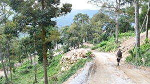 En väg har utan tillstånd dragits upp till den blivande durianodlingen. Delar av den har redan asfalterats.