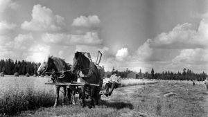 Hevosten Määrä Suomessa
