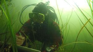 En dykare som gör anteckningar om växter under havsytan.