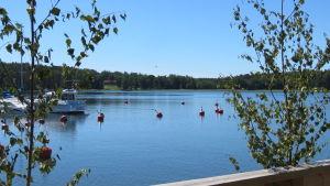 Bromarv skärgårdshamn. Vatten, några båtar och bojar. Midsommarbjörkar (halvvissna) vid en uteservering.