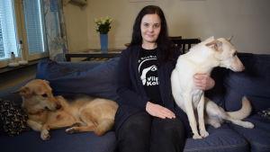 Aino Arjas är ordförande för Viipurin koirat, som nu undersöker de hundar de importerat för resistenta bakterier.