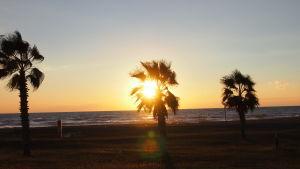 Rantamaisemaa Syyriassa Välimeren rannalla, palmuja ja auringonlasku.