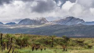 Maisemakuva Uutta Guineaa halkovasta vuoristosta