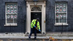 Lövkrattare utanför 10 Downing Street i London