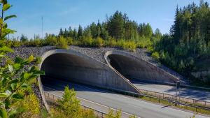 Djurbro över motorväg.