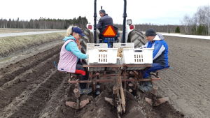 Nataliia Klymyk och Vitalii Vakar från Ukraina sitter bakpå en traktor och sätter potatis på en åker. Ruslan Klymyk kör traktorn.