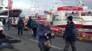 Turistnäringen går bra i Island