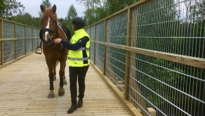 En ryttare leder en häst på en friluftsled.