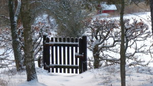En grind i ett snöklätt vinterlandskap. Landsbygd. Grinden är byggd av träribbor.