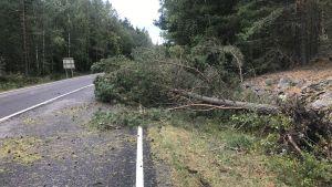 Ett träd har fallit på en landsväg under en storm.