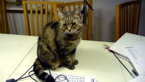 Bild på en grå-svart randig katt som sitter på ett bord. Framför katten fjärrkontroll och elsladd.