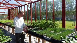 Mats Nyman inne i ett stort luftigt växthus. Växthuset är byggt av träbalkar som är målade med rödmylla. På borden finns många gröna plantor, bland annat purjolök.