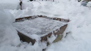 En odlingslåda som har grävts fram ur snön, förberedd för vintersådd.