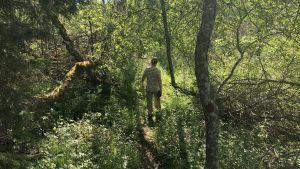 Hans Hästbacka går i skogen.