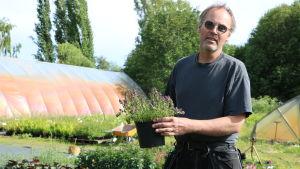 Kjell Wickman visar en Backtimjan som han drivit upp på sin plantskola
