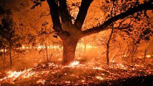 Puu palaa öisessä metsässä. Koko maasto on tulenpunainen.