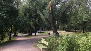 Träd i Tölöviksparken som brustit