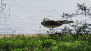 Strandbryn.  En sten som sticker upp ur vattnet. Sommar och soligt.