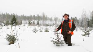 Små granar i snöig skog, en man håller i toppen på en av dem.