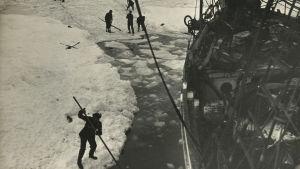 Sjömän försöker frigöra skeppet Endurance ur den täta packisen