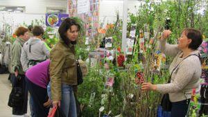 Flera kvinnor står vid en bänk där körsbärsträd finns till försäljning.