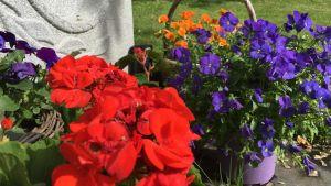 Blommor, färggrannt.
