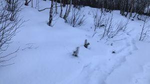 Älgspår i snön.