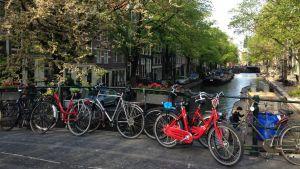Cyklar vid kanal i Amsterdam