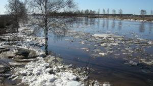 Islossning i Kyro älv
