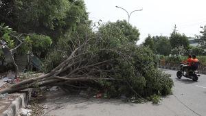 Hårda vindar blåste omkull träd och elstolpar över hela Indien. Bilden är från huvudstaden Delhi