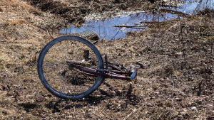 Bortslängd gammal rostig cykel. Den ligger på marken nära ett vattenfyllt dike i naturen.