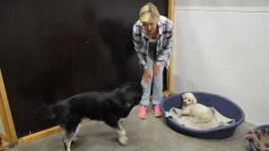 ann-britt schüler tittar på två hundar som besöker hunddagiset