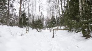 En bäck vintertid. Det syns inget vatten, bara snö. Mitt över bäcken går en kohage.