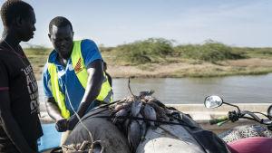 När fiskarna som åkt långt ut för att fiska kommer till stranden på morgonen säljer de fisken vidare till köpmän som säljer dem på marknaden. Största delen förs ändå bort från Turkana.
