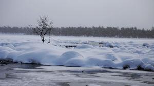 Inarinjärven kevät