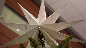 En vit julstjärna i toppen av granen som står i Villa Lande i KImito.