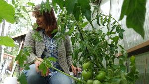 Riikka Slunga-Poutsalo fixar med tomatplantor i sitt växthus.