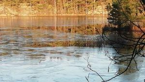 Ett tunt istäcke på vattnet i en vik.