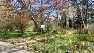 Blomsterrabatter och träd i botansiska trädgården.