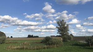Vidsträckta åkrar och en blå himmel med fluffiga moln.