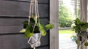 makrameampel som hänger vid ett fönster