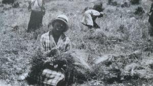 Hilma Granqvist deltog i skördearbetet i byn Artas i Palestina våren 1926.