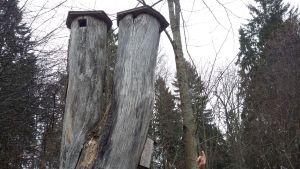 Gamla, ihåliga trädstammar som byggts om till fågelholkar.