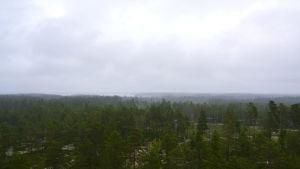 Utsikt från Karikatornet i Österhankmo.