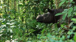 Kaakkois-Aasian saarilla kukoistaa monimuotoinen luonto.