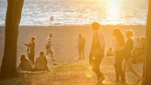 Flera unga på sandstrand i solnedgången.