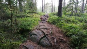Friluftsled i Trollskogen i Ekenäs.