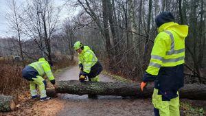 Personer som röjer ett omkullfallet träd.