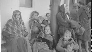 Ingermanländska flyktingar på väg till Finland år 1943.